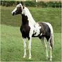 3 Dvd´s Cavalos Monty Roberts Redeas Casqueamento B5