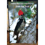 Guia Das Aves/ Guide To The Birds