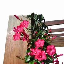80da1d9db4 Jardinagem Plantas a venda no Brasil. - Ocompra.com Brasil