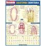 Resumao Anatomia Dentaria Barros, Fischer E Associados