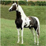 Cavalos 3 Dvd´s Monty Roberts Redeas Casqueamento B3l