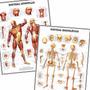 Kit 2 Posters Esqueleto Músculos 60x80cm Para Decorar Sala