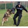Aulas Para Todas As Raças Adestramento De Cães Em 3 Dvds P2w