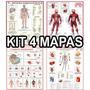 4 Mapa Corpo Humano Muscular Circulatório Esquelético Barato