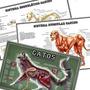 Kit 3 Mapa 65x100cm Músculos Ossos Cachorro Anatomia Gatos