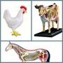 Anatomias Do Cavalo, Vaca E Galinha 4d Master