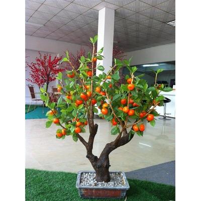 Comprar como cultivar bonsai envio e mail pdf apenas r for Como cultivar bonsais